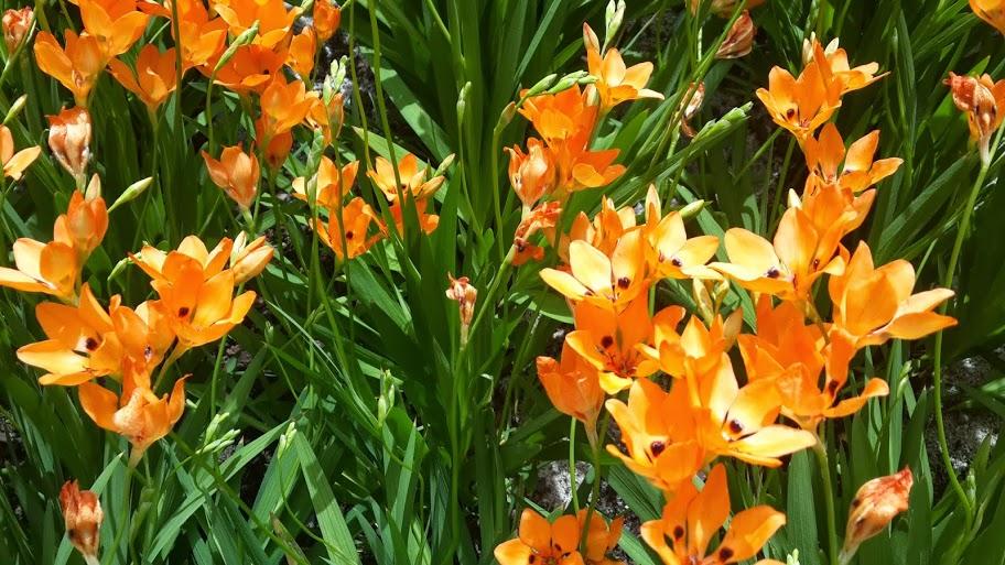 Adventura_Africa_Orange_Flower